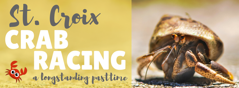 Things to See in St. Croix: Crab Racing