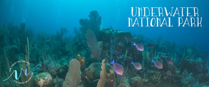 Underwater National Park in Trunk Bay